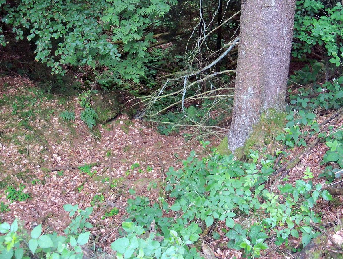 Schützenmulde im Wald.