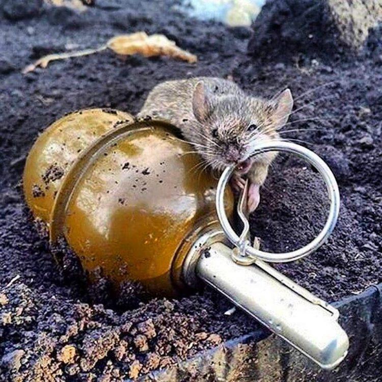 Bildbeitrag: Wie entschärft man eine Handgranate? Bild: Internetfund.